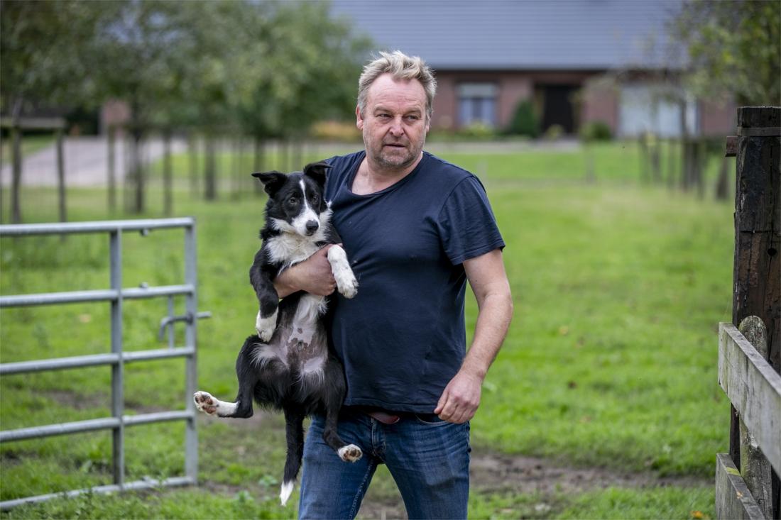Chris Caerts, de schaapherder van de Kempen: 400 schapen, 15 honden en een B&B - Gazet van Antwerpen