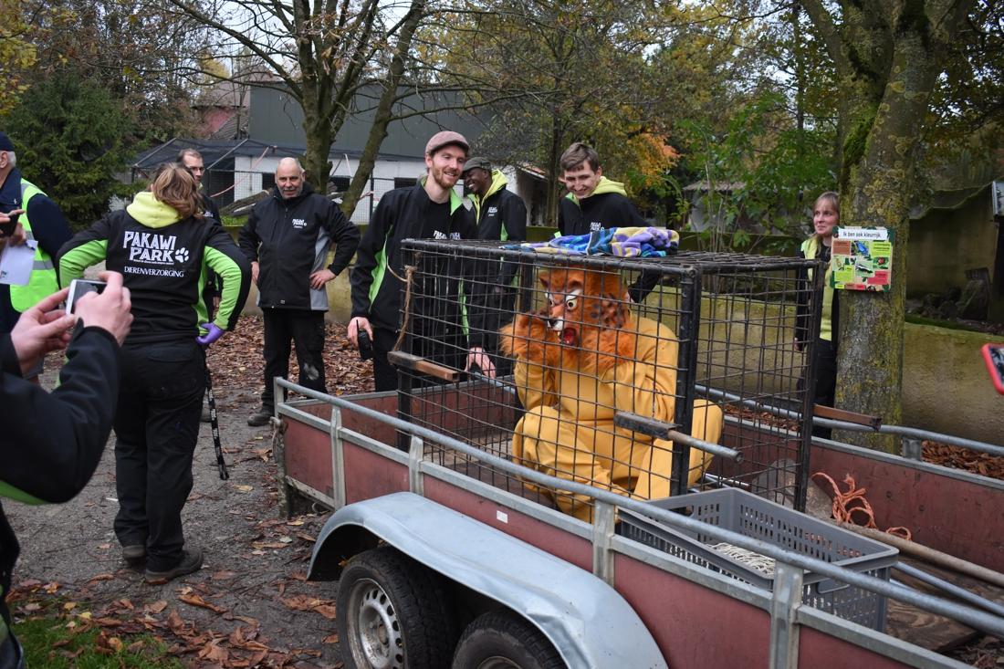 """'Ontsnapte leeuw' in Pakawi Park tijdens noodplanoefening: """"... (Balen) - Gazet van Antwerpen"""