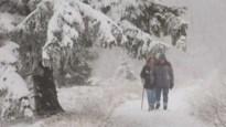 Daar is de winter: eerste dikke sneeuwtapijt in Hoge Venen