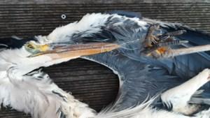 """Reiger sterft door visdraad, Natuurpunt verspreidt foto: """"Vissers, laat geen materiaal rondslingeren"""""""