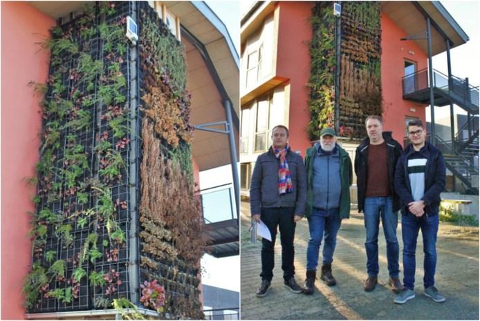 Steinerschool zuivert afvalwater met verticale muurtuin