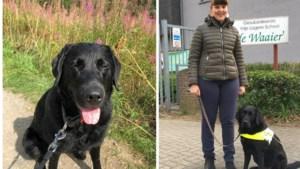 """Slechtziende Julie voert actie voor blindengeleidehonden: """"Marnie betekent voor mij een wereld van verschil"""""""