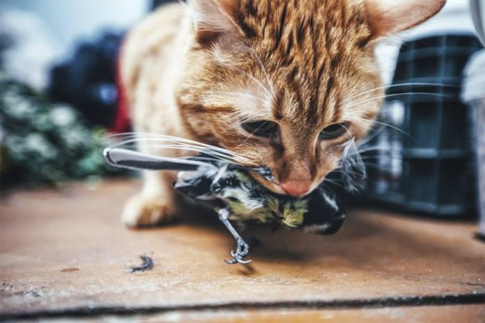 """Kat in tuin is overtreding van Europese regels: """"Dit is het ideale excuus om zwerfkatten af te knallen, walgelijk"""""""