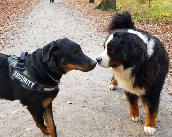 """Maak van dit oninteressant bos grote datingzone voor honden"""