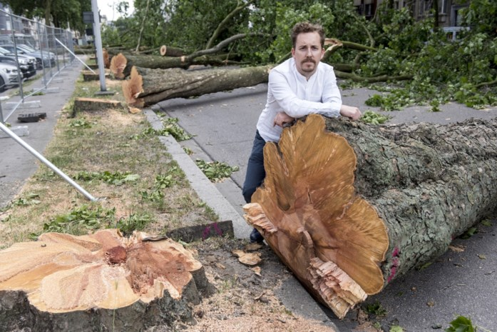 """Post foto's met #houtvantStad: """"Waar leven de bomen van de Italiëlei verder?"""""""