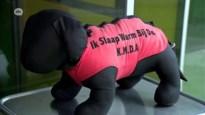 """Opvangdienst voor honden van daklozen geen succes: """"We kunnen de daklozen toch niet mee in dat hok laten slapen"""""""