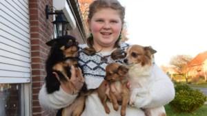 """Sanne (14), de jongste transgender van het land: """"Later word ik hondenkapster, aan dieren kun je alles kwijt"""""""