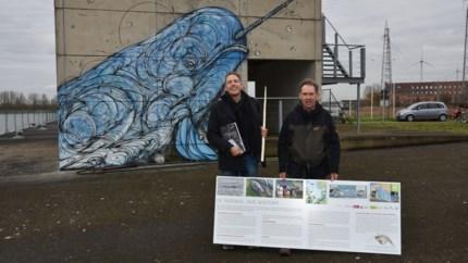Infopanelen en tekening aan Zeesluis over de aangespoelde narwal van Wintam