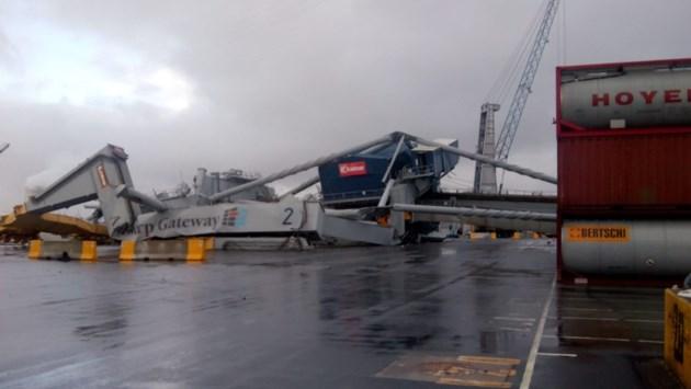Op drift geslagen containerschip botst tegen kraan in Waaslandhaven: enorme ravage
