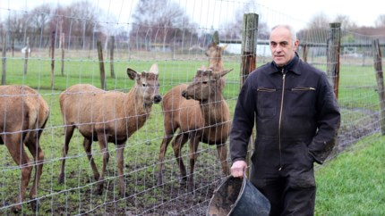 Cisse Vleminckx tovert zijn hertenboerderij om tot co-housingproject