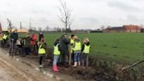 Eerste stap naar groenere gemeente gezet: nieuwe bomen en struiken op Dijkweg, Bosweg en Hoogbosweg