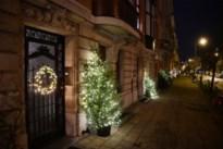 Straatcomité Wilrijkse Eglantierlaan zet traditie verder: al 18 jaar 'die straat van de kerstbomen'