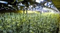 De Kempen, cannabiskolonie van de poldermaffia