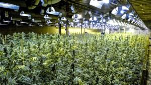 De Kempen, cannabiskolonie van de poldermaffia: bekijk de plantages op kaart
