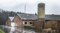 Stikstofproblemen waaien over: Nederland laat vergunning voor veehouderij in Ravels vernietigen