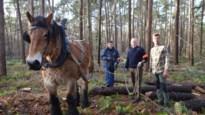 Vrijwilligers slepen op vraag van vader abt bomen uit trappistenbossen