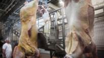 Schotenaar is spil in vleesschandaal: besmet vlees op nippertje uit voedselketen gehaald