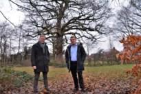 Kalmthout fatsoeneert park om oudste eik van gemeente beter tot zijn recht te laten komen