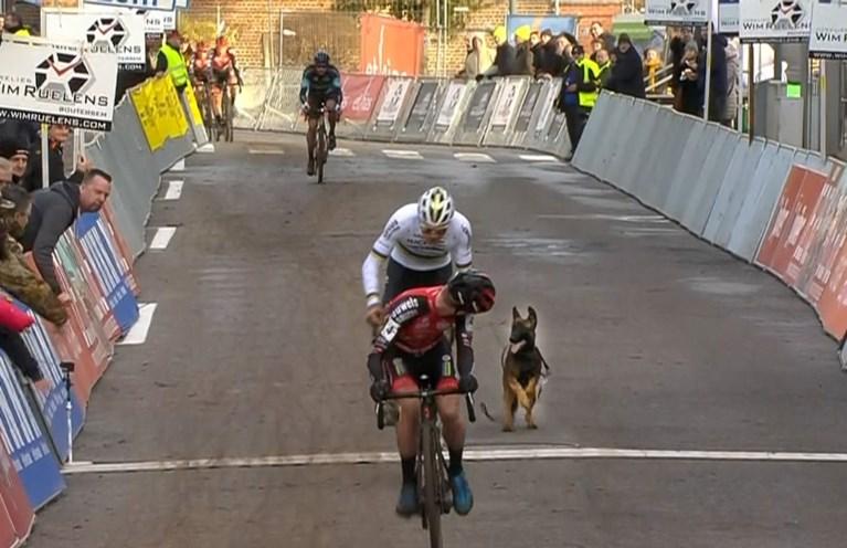 Loslopende hond zorgt voor opschudding in Druivencross