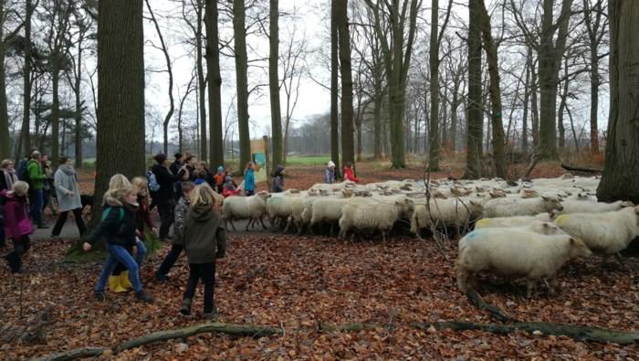 Massa 'drie koningen' speelt herder voor kudde schapen