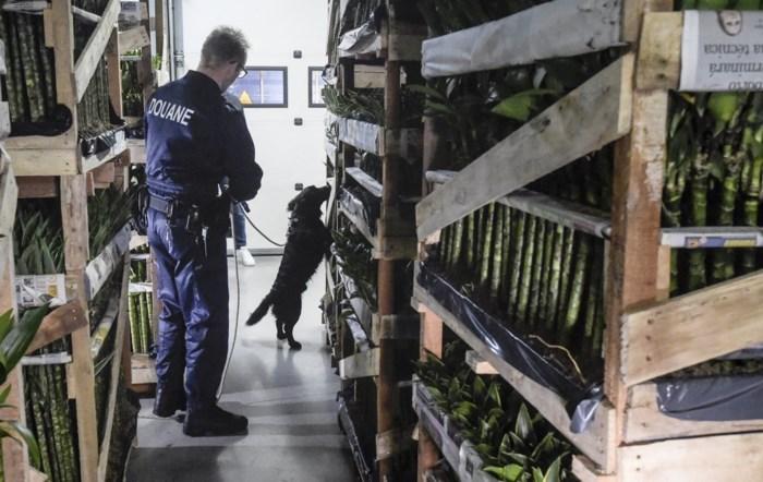 Bijna 62 ton cocaïne onderschept in Antwerpen in 2019: daarom beleeft haven alweer recordjaar