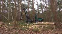 VIDEO. Haasdonkse bossen worden stevig uitgedund