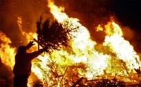 Steeds minder kerstboomverbrandingen in de Kempen