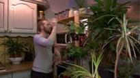 Deskundig advies over planten in huis? Het kan dankzij deze 'plantenbutler'