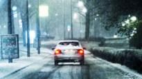 Geen winter meer in januari, en ondertussen wordt de natuur weer wakker