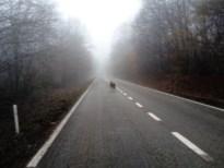 Plots spot iedereen 'wolven': Welkom Wolf overstelpt met meldingen