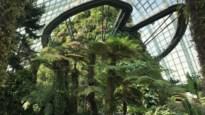 Superieure bomen, nachtleven in de zoo en de beste luchthaven ter wereld: tips voor een reis naar Singapore