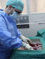 Donorlever kan week in machine overleven