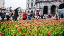 Tulpen plukken en negen andere tips voor het weekend