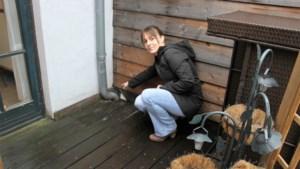 Greet heeft al maanden last van ratten in haar woning: