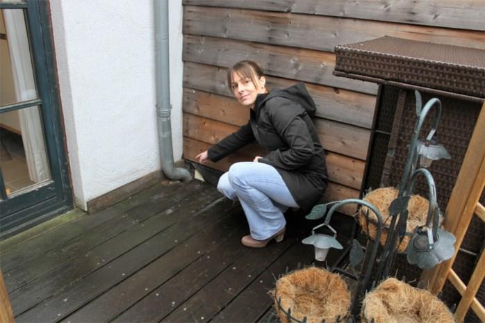 """Greet heeft al maanden last van ratten in haar woning: """"Via een oproep hoop ik een rattenplaag te voorkomen"""""""