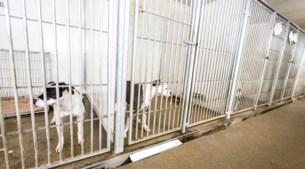 Onze asielen zitten vol 'gewone' honden waar niets mee aan te vangen is
