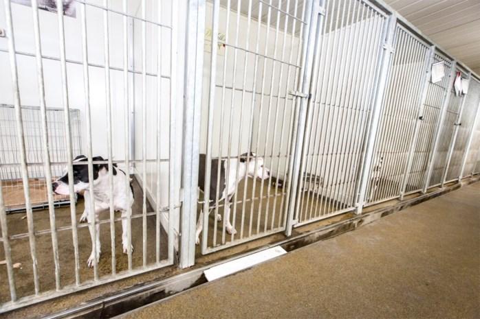 """Onze asielen zitten vol 'gewone' honden waar niets mee aan te vangen is: """"Men weet niet hoe een hond op te voeden"""""""