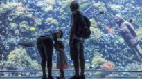 Antwerpen wereldwijd op plaats 33 van meest familievriendelijke steden
