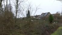 70-tal bomen in Niel door misverstand gerooid