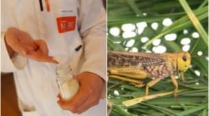 Cosmeticabedrijf Mylène experimenteert met insecten: smeert u binnenkort krekelvet aan uw handen?