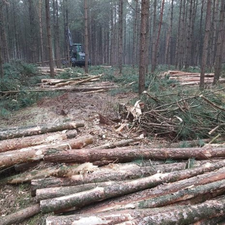 Naaldhout moet wijken voor inheemse loofbomen