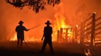 Klimaat maakt bosbranden nog extremer