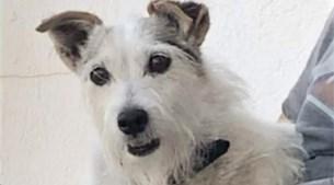 """Gestolen hond wordt volgende middag fris gewassen teruggebracht: """"Heel raar"""""""
