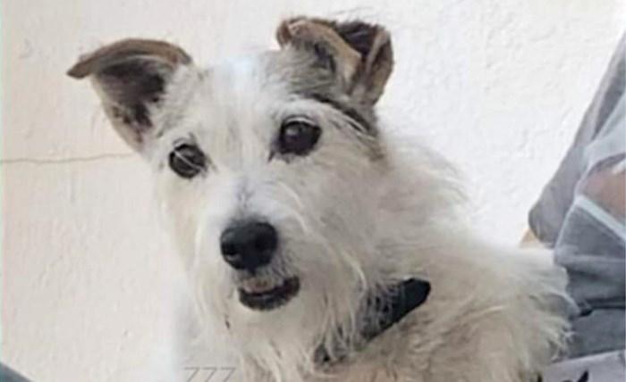 """Gestolen hond wordt volgende middag fris gewassen teruggebracht: """"Het is heel raar"""""""