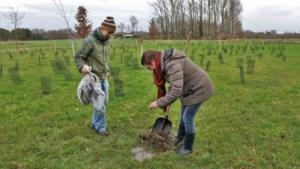 """Gemeente wil 11.500 bomen meer tegen 2024: """"We rekenen daarvoor ook op onze inwoners"""""""