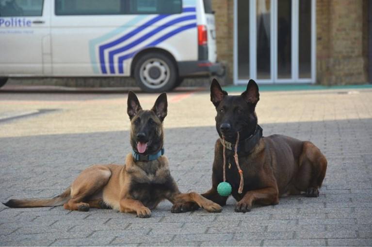 """Indrukwekkend eerbetoon voor verongelukte politiehonden Drago en Blue: """"Jullie brachten een lach op mijn gezicht"""""""