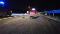 Motorrijder komt om na crash tegen vrachtwagen op E313