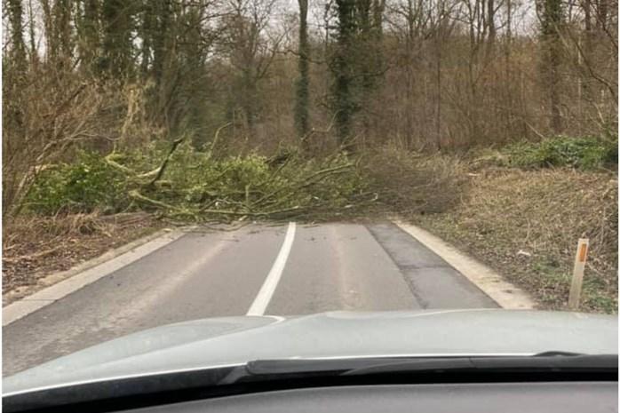 Eerste meldingen in omgeving Mechelen: vooral omgewaaide bomen