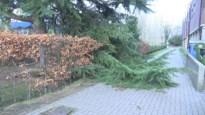 Verschillende scholen blijven gesloten door de storm