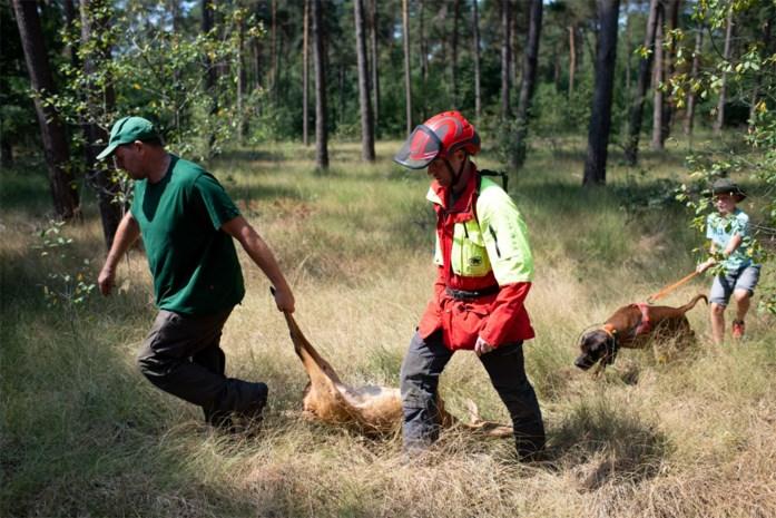 """Nazoekteam verlost gewond wild uit zijn lijden: """"Laat een dier niet creperen als je het aanrijdt"""""""